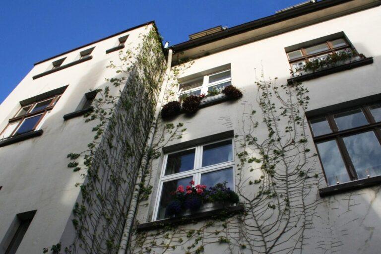 Die Fassade als grüne Lunge des Hauses