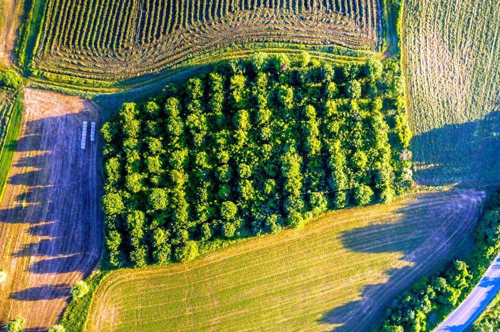 Immobilienbewertung Oberspreewald-Lausitz